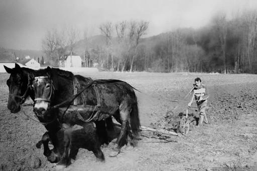 , hae_0288, Pflügen mit Pferden, wohl 1985