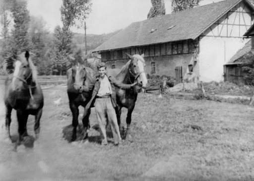 , hae_0289, Pferde vom Hof Korengel , um 1950