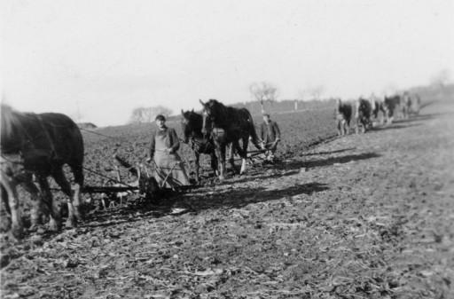 , schue_0001, Landwirtschaft, wohl 1960